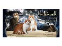 Логотип Питомник шотландских вислоухих кошек HALLIWELL